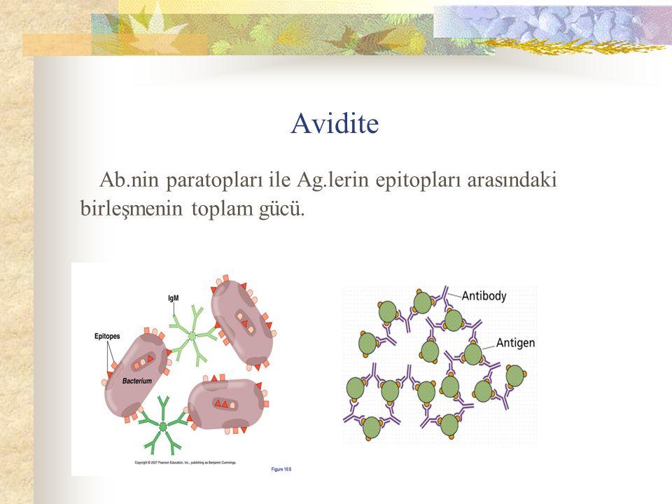 Ab.nin paratopları ile Ag.lerin epitopları arasındaki birleşmenin toplam gücü. Avidite