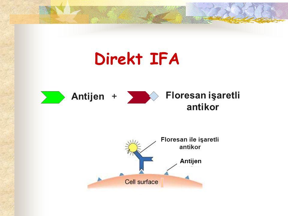 Direkt IFA Antijen + Floresan işaretli antikor Antijen Floresan ile işaretli antikor