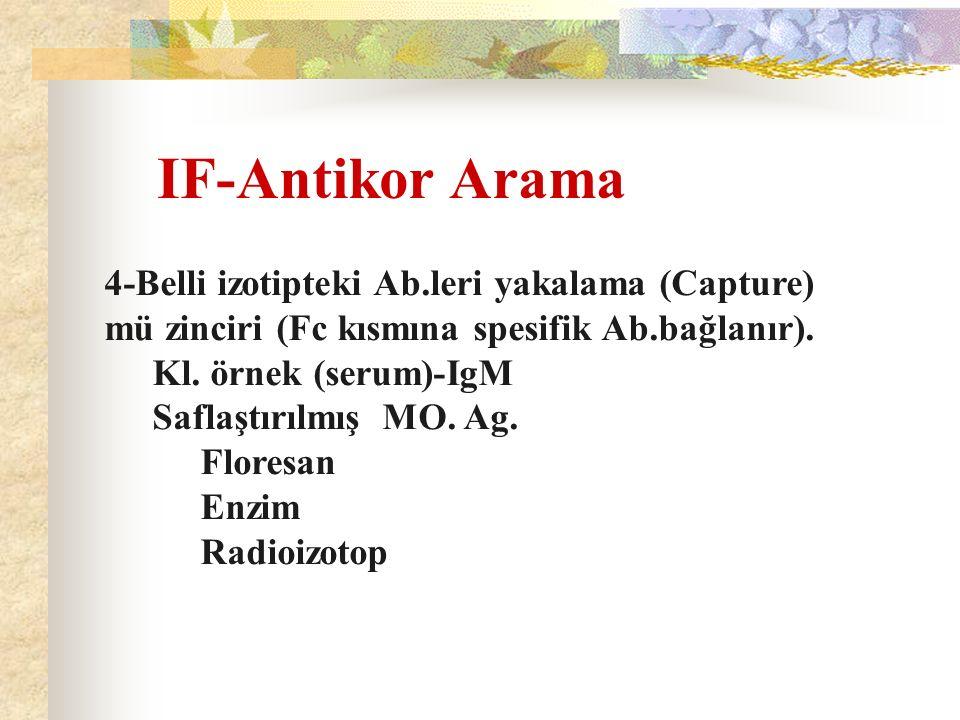 IF-Antikor Arama 4-Belli izotipteki Ab.leri yakalama (Capture) mü zinciri (Fc kısmına spesifik Ab.bağlanır). Kl. örnek (serum)-IgM Saflaştırılmış MO.