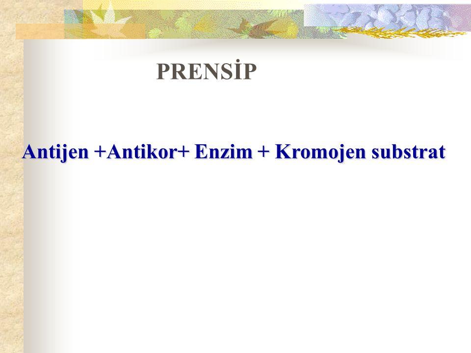 Antijen +Antikor+ Enzim + Kromojen substrat PRENSİP