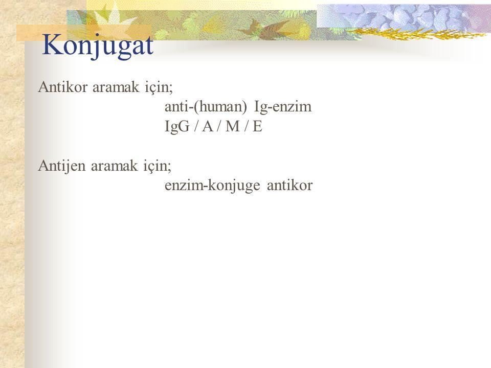 Konjugat Antikor aramak için; anti-(human) Ig-enzim IgG / A / M / E Antijen aramak için; enzim-konjuge antikor