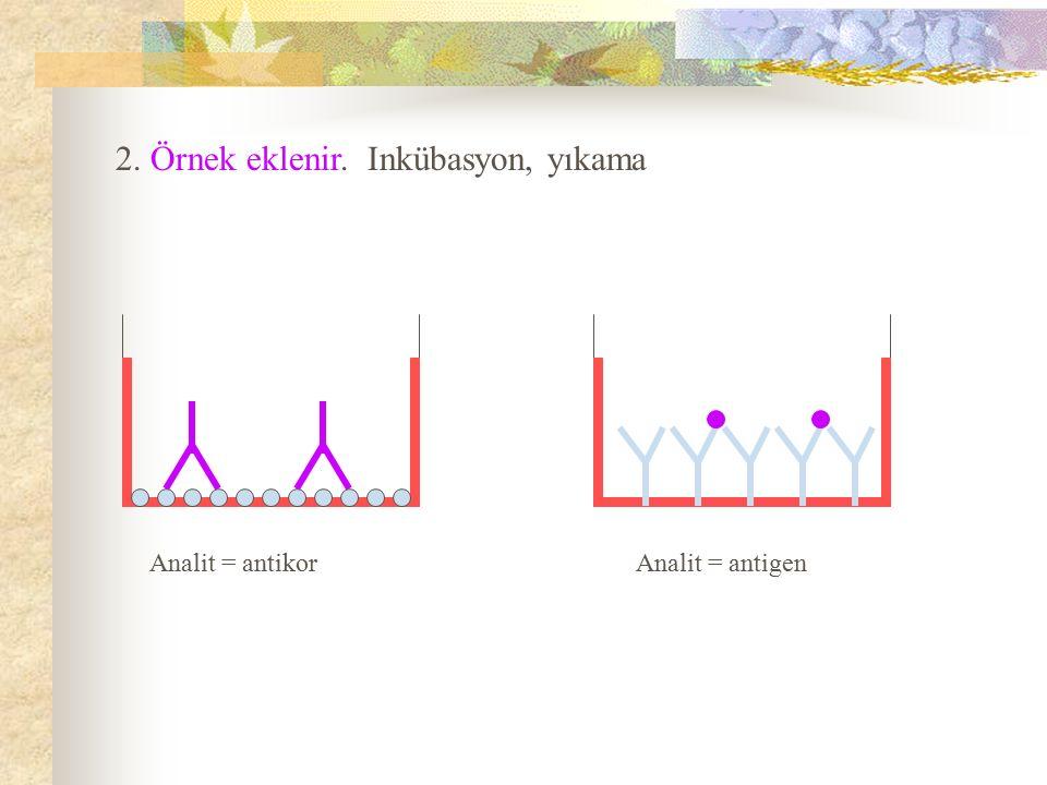 2. Örnek eklenir. Inkübasyon, yıkama Analit = antikor Analit = antigen