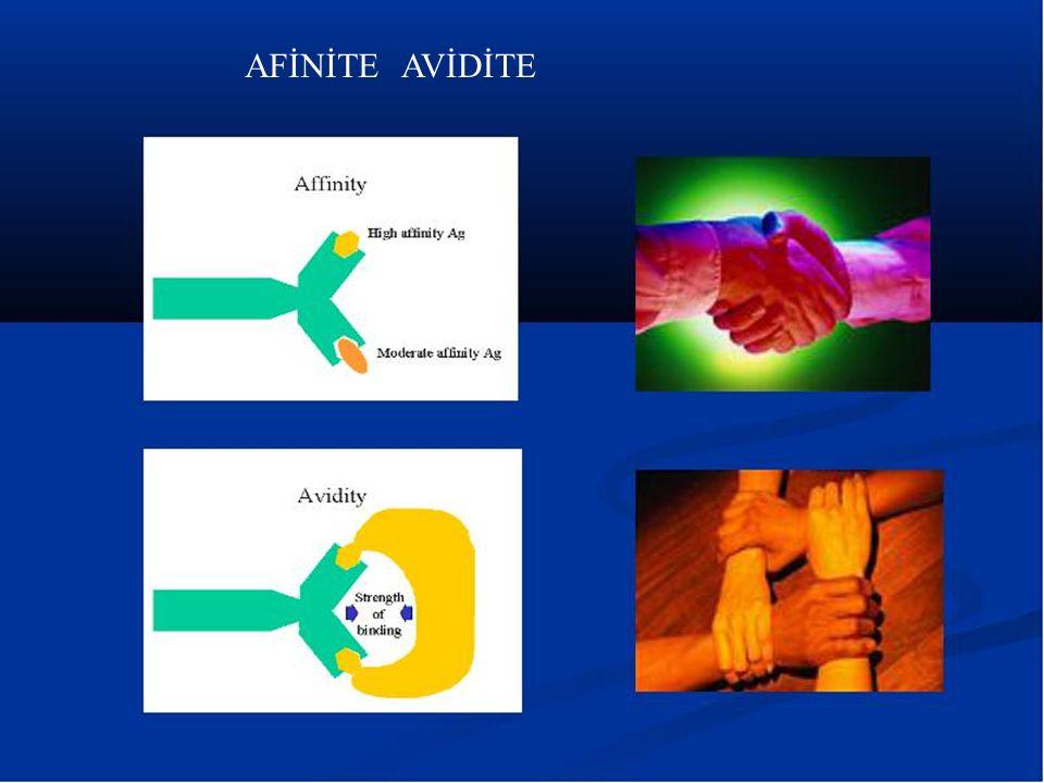 Afinite - Avidite AFİNİTEAVİDİTE