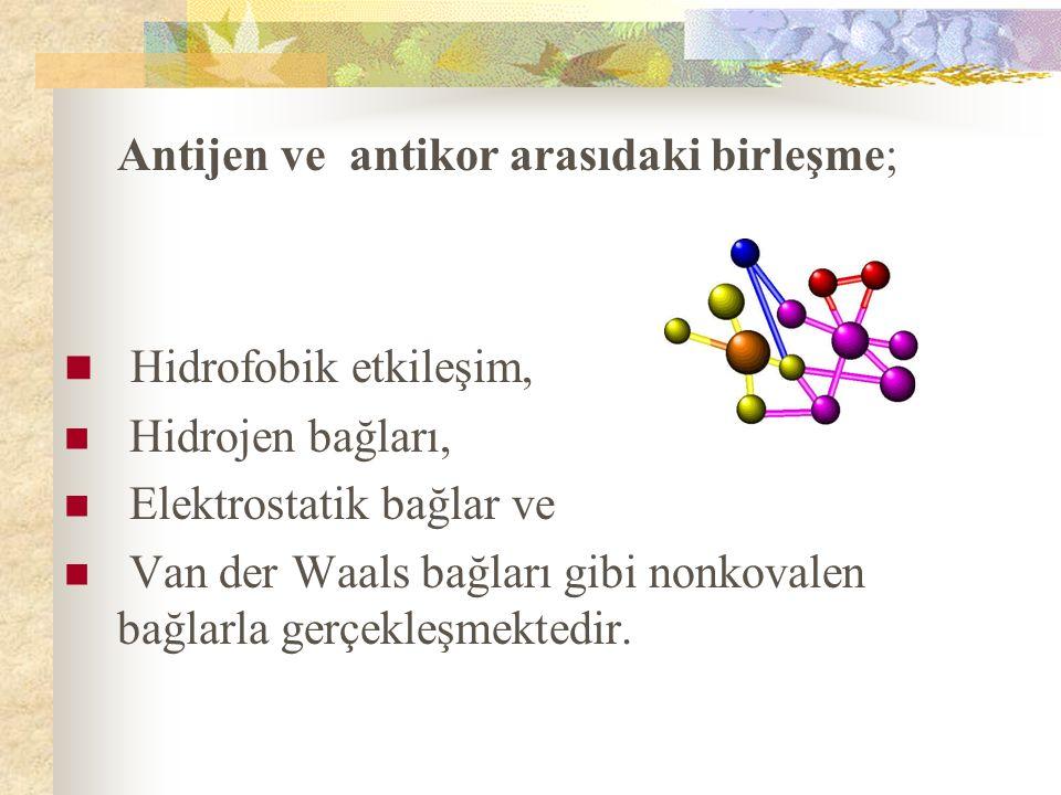 Antijen ve antikor arasıdaki birleşme; Hidrofobik etkileşim, Hidrojen bağları, Elektrostatik bağlar ve Van der Waals bağları gibi nonkovalen bağlarla gerçekleşmektedir.