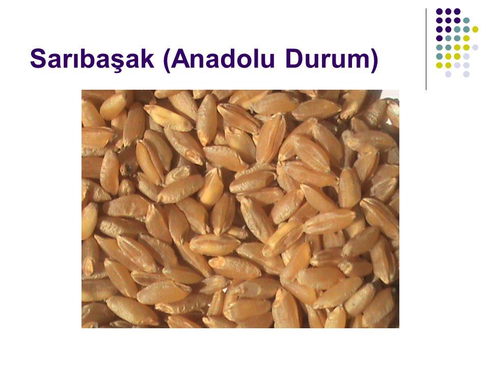 Sarıbaşak (Anadolu Durum)