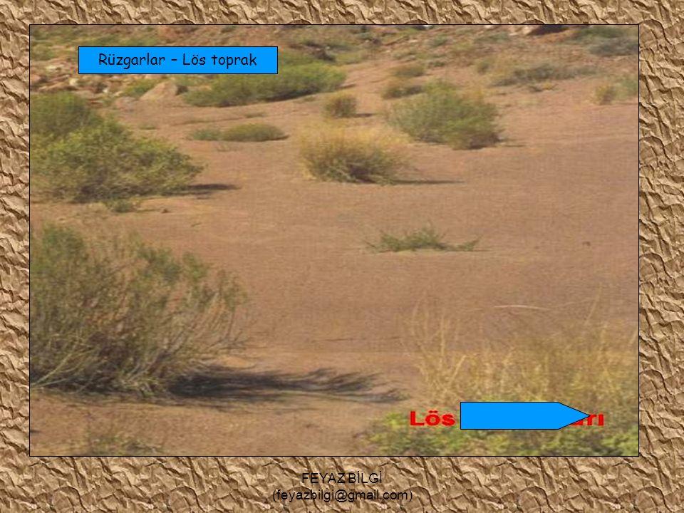 FEYAZ BİLGİ (feyazbilgi@gmail.com) Toprak Oluşumu Oluşum bakımından topraklar ikiye ayrılır : A ) Taşınmış topraklar : Verimlidirler.