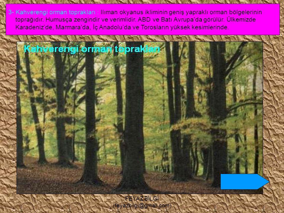 FEYAZ BİLGİ (feyazbilgi@gmail.com) 2- Podzol ( gri ) topraklar : Soğuk ve nemli bölgelerin toprağıdır.