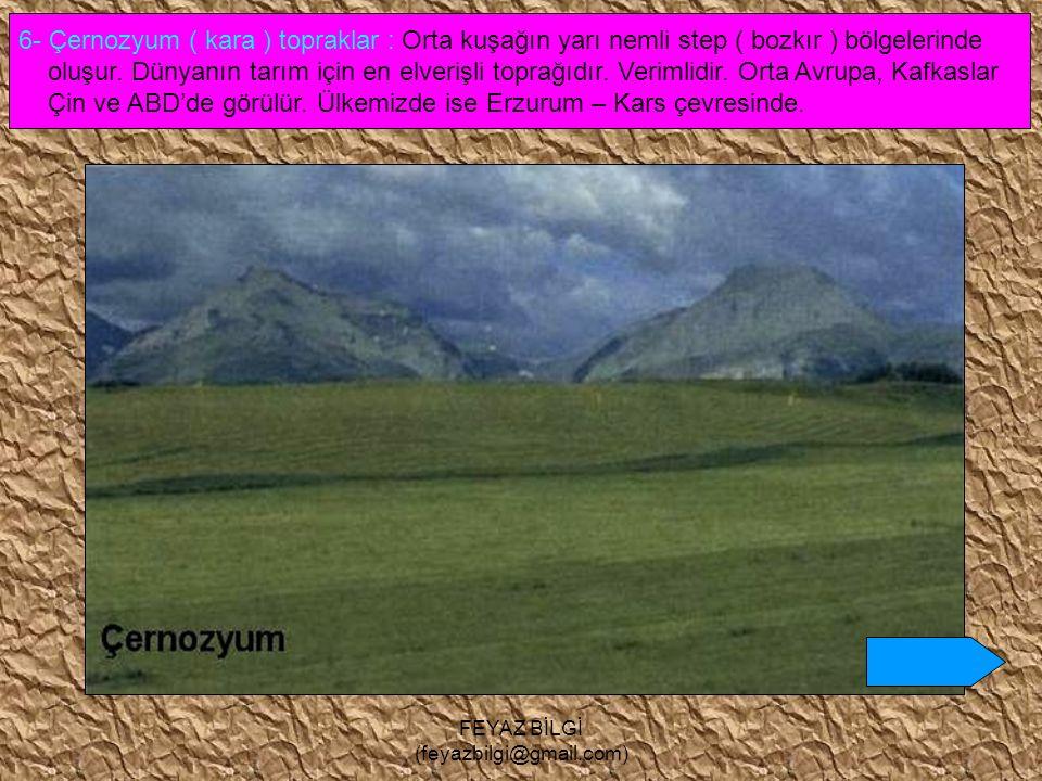 FEYAZ BİLGİ (feyazbilgi@gmail.com) 5- Laterit topraklar : Yüksek sıcaklık ve bol yağışın görüldüğü Ekvatoral iklim bölgelerinde oluşur. Verimsizdir. Ü