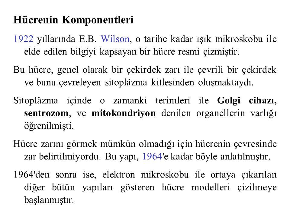 Hücrenin Komponentleri 1922 yıllarında E.B.