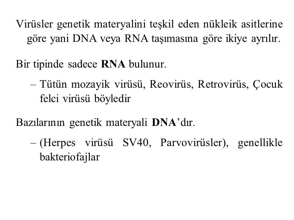 Virüsler genetik materyalini teşkil eden nükleik asitlerine göre yani DNA veya RNA taşımasına göre ikiye ayrılır. Bir tipinde sadece RNA bulunur. –Tüt