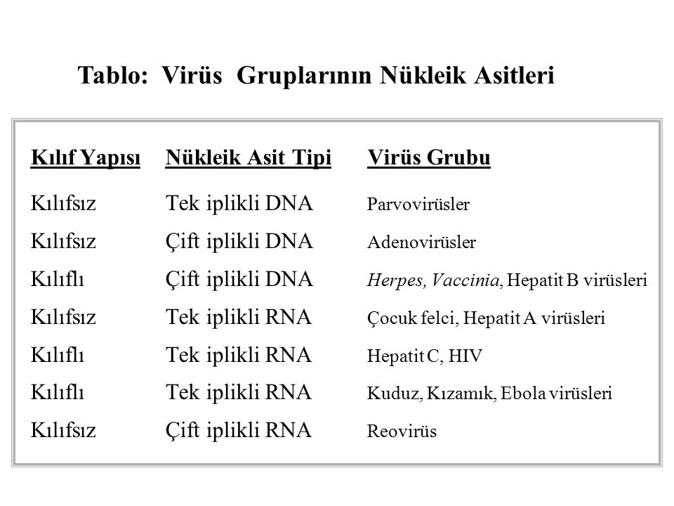Kılıf YapısıNükleik Asit TipiVirüs Grubu KılıfsızTek iplikli DNA Parvovirüsler KılıfsızÇift iplikli DNA Adenovirüsler KılıflıÇift iplikli DNA Herpes, Vaccinia, Hepatit B virüsleri KılıfsızTek iplikli RNA Çocuk felci, Hepatit A virüsleri KılıflıTek iplikli RNA Hepatit C, HIV KılıflıTek iplikli RNA Kuduz, Kızamık, Ebola virüsleri KılıfsızÇift iplikli RNA Reovirüs Tablo: Virüs Gruplarının Nükleik Asitleri