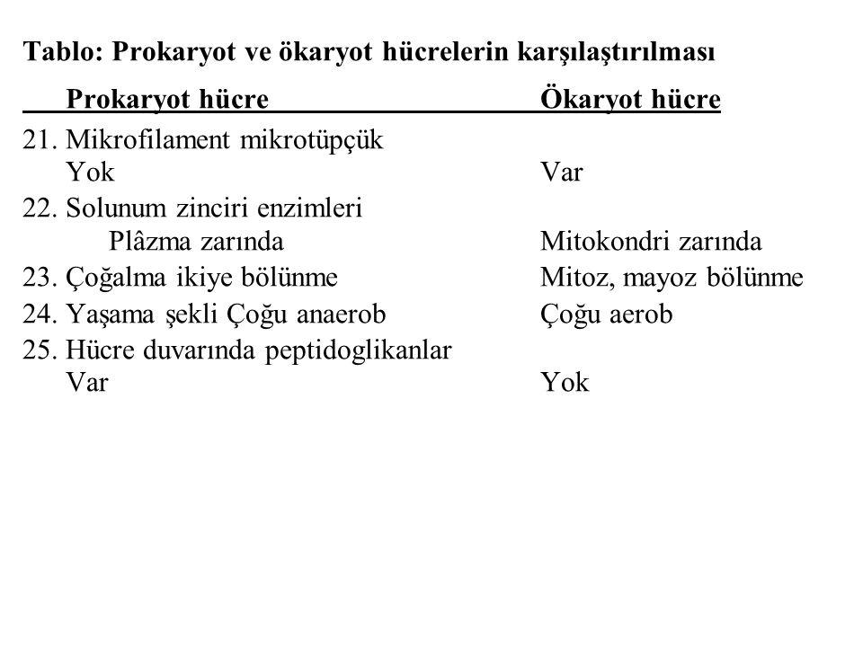 Tablo: Prokaryot ve ökaryot hücrelerin karşılaştırılması Prokaryot hücreÖkaryot hücre 21. Mikrofilament mikrotüpçük YokVar 22. Solunum zinciri enzimle