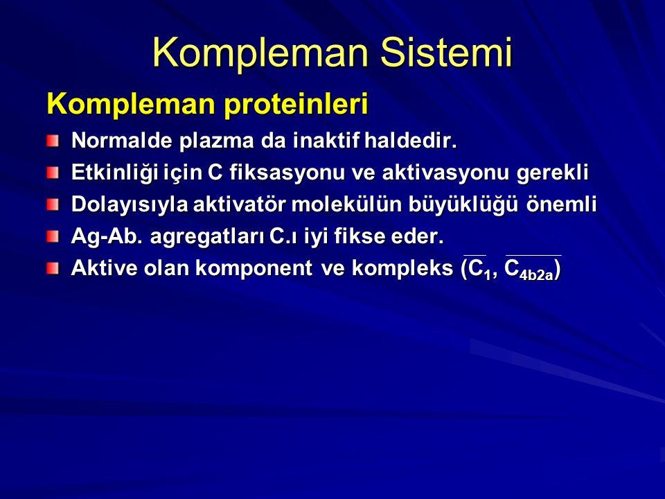 Kompleman proteinleri Sentezlenme Yerleri Hepatositler Monosit/Makrofaj hücreleri Hematopoetik hücreler Fibroblastlar Endotelial hücreler AdipositlerA