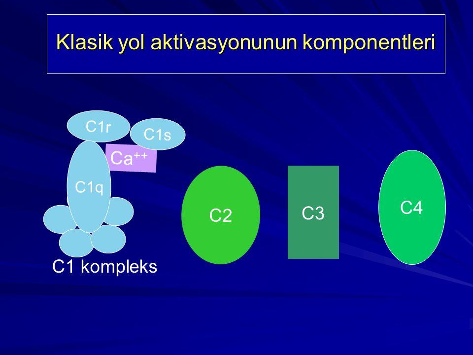 Kompleman Sistemi Kompleman Sistemi Klasik yol C 1, C 2, C 3, C 4, C 5, C 6, C 7, C 8 ve C 9 IgM ve Ig G ( IgG3, IgG1 ve çok az olarak IgG 2 )