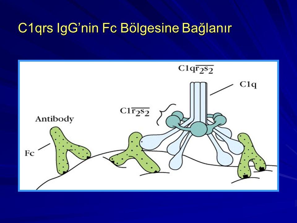 Klasik yol IgM molekülü IgG'ye oranla daha iyi kompleman bağlar. IgG alt sınıflarından IgG3, IgG1 ve IgG2 IgG4, IgA, IgD, IgE komplemanı bağlamazlar.