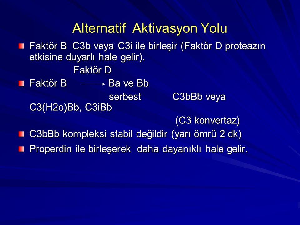 Alternatif Aktivasyon Yolu Özgül antijen-antikor birleşmesi olmadan meydana gelir. Aktivasyon C3 proteinin parçalanmasıyla başlar. C3 proteinin parçal