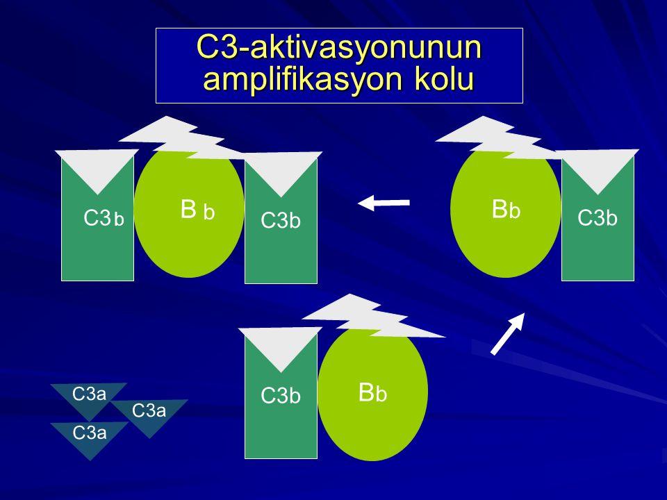 B D BbBb C3b C3 b C3-aktivasyonunun amplifikasyon kolu C3b C3a b