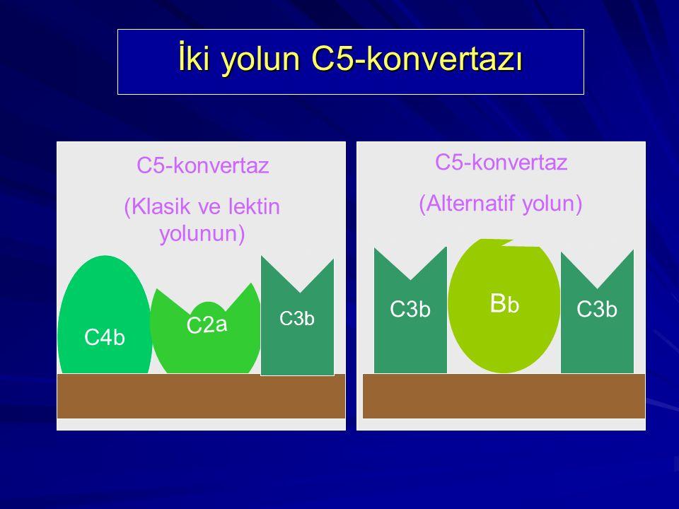 Membran Atak Kompleksi C8 ve C9 ile bağlantı yapabilir.C7 molekülü amfifiliktir. Aynı molekülde bulunmaları polimerizasyona yol açar C5b6789 polimeriz