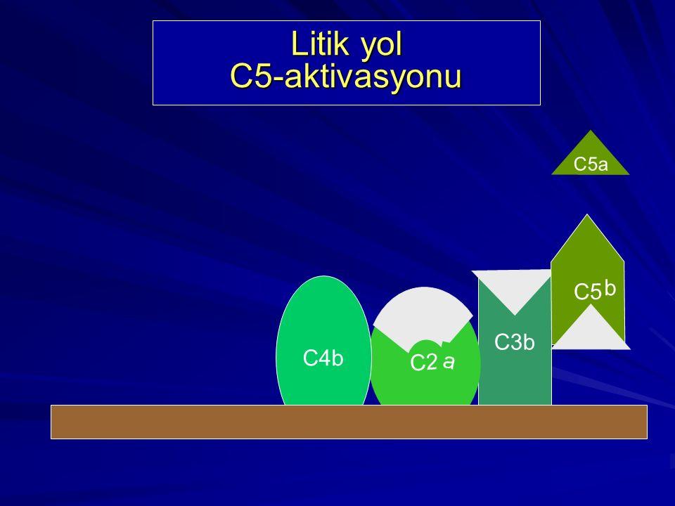 Litik Yol Bileşenleri C6 C9C9 C8 C7 C5