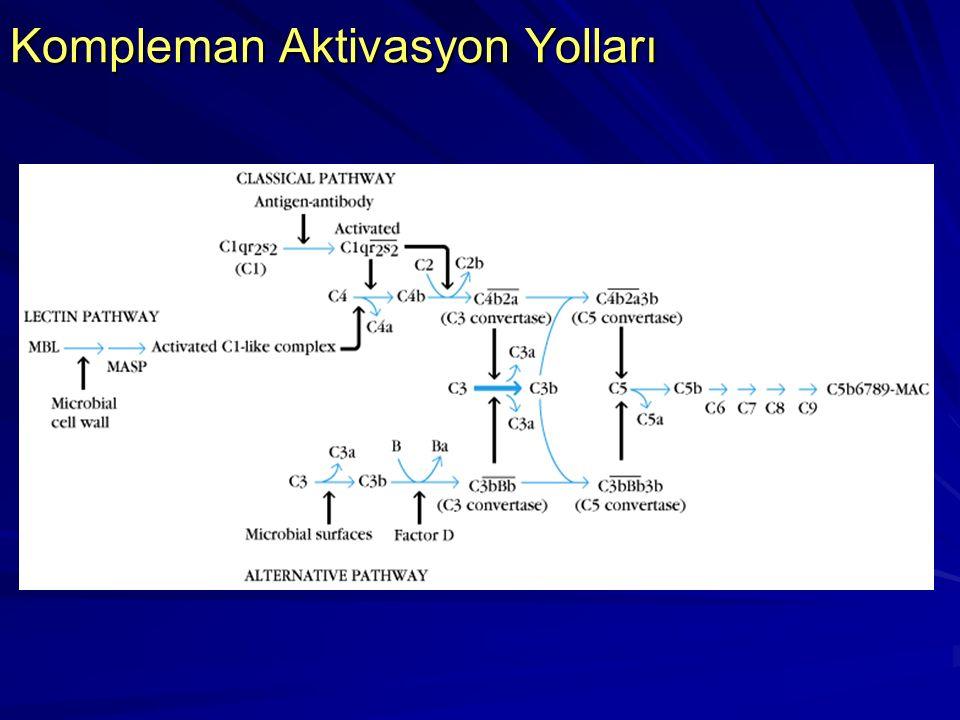 Terminal Kompleman Bileşenleri Protein Aktif bileşen Fonksiyon C5C5a İnflamasyonun küçük medyatörüdür. C5b MAK' ni başlatır. C6C6 C5b' yi bağlar, C7 i