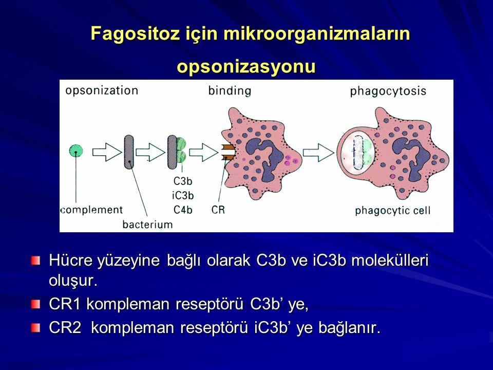 Hücre lizisi Yabancı mikroorganizmalar öldürülür Humoral immün yanıt sonucu oluşan özgül antikorlar vardır. Komplemanın C1-9'a kadar aktivasyonuyla ol