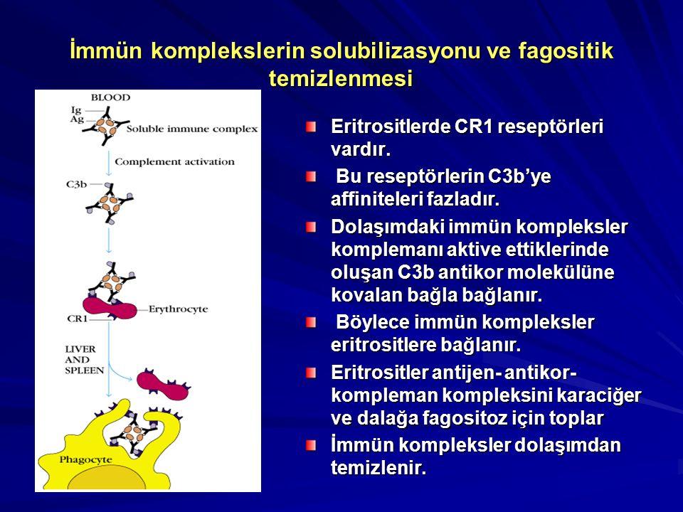 C5a' nın biyolojik etkileri
