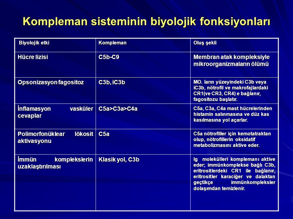 Spesifik antikor cevabının indüklenmesi B lenfositler ve antijen sunan hücrelerde antijen lokalizasyonunu arttırarak spesifik antikor cevabını indükle