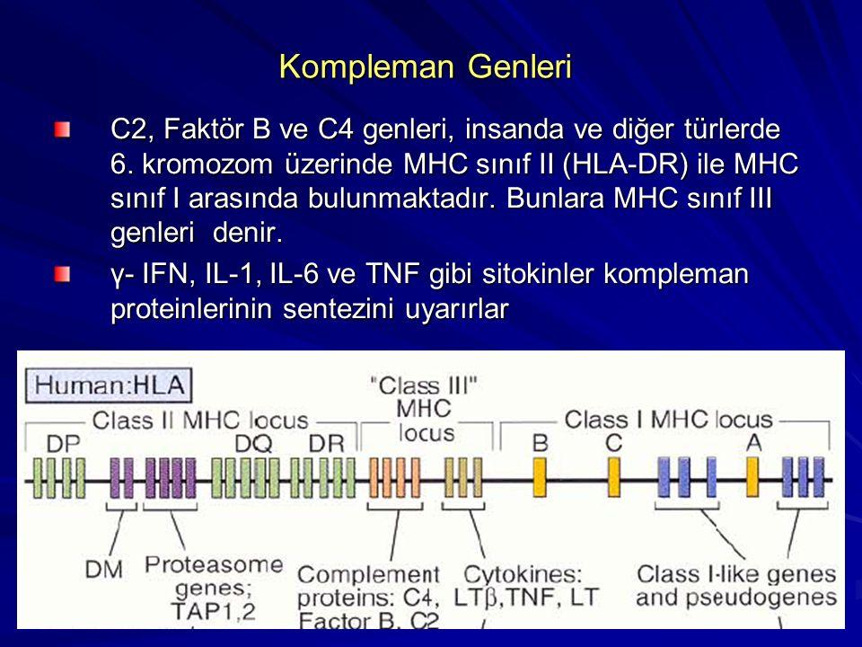 Kompleman Proteinlerinin Biyolojik Fonksiyonları Hücre lizisi Opsonizasyon ve fagositoz Lökositlerin inflamasyon ve aktivasyonunda kemotaktik etkileşim Lökositlerin inflamasyon ve aktivasyonunda kemotaktik etkileşim İmmün komplekslerin solubilizasyonu ve fagositik temizlenmesi: Spesifik antikor cevabının indüklenmesi