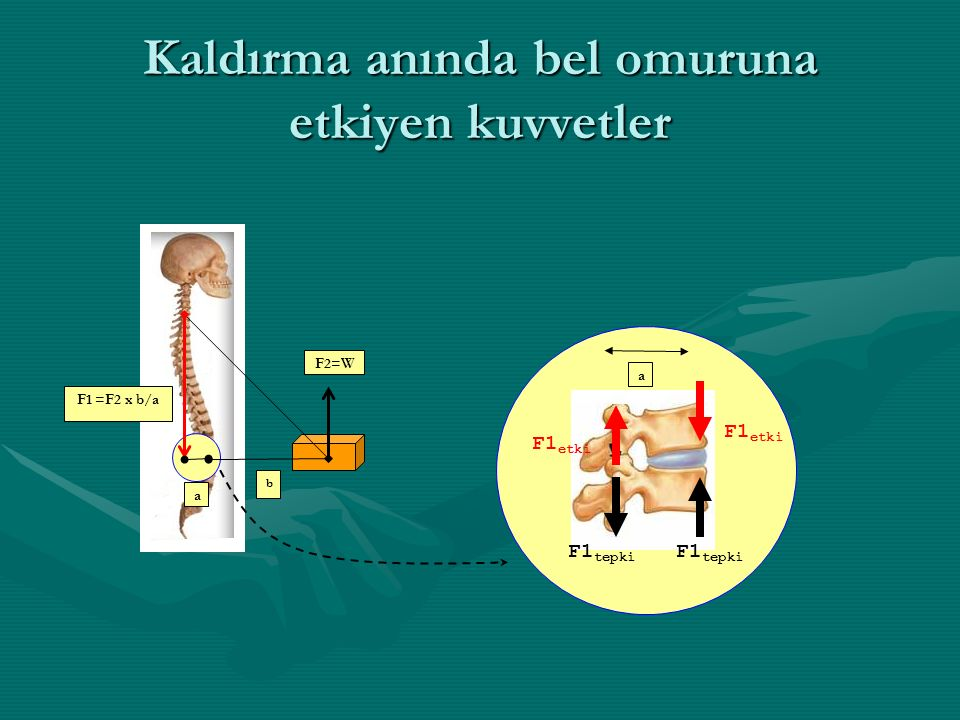 Kaldırma anında bel omuruna etkiyen kuvvetler a b F2=W F1 =F2 x b/a F1 etki F1 tepki a F1 etki F1 tepki