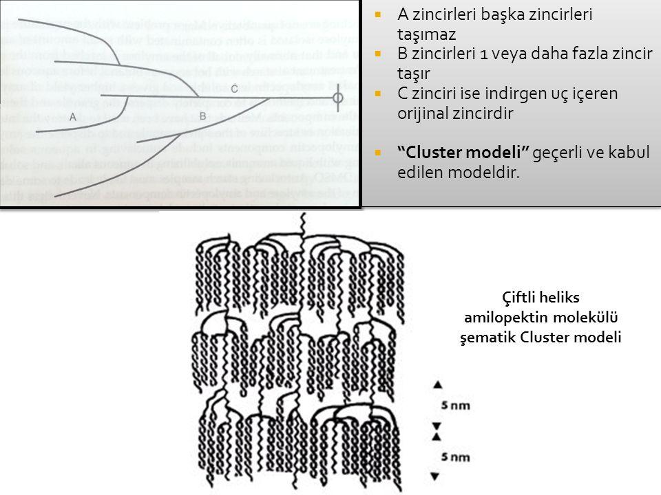 """ A zincirleri başka zincirleri taşımaz  B zincirleri 1 veya daha fazla zincir taşır  C zinciri ise indirgen uç içeren orijinal zincirdir  """"Cluster"""