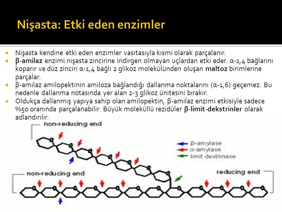  Nişasta kendine etki eden enzimler vasıtasıyla kısmi olarak parçalanır.  β-amilaz enzimi nişasta zincirine indirgen olmayan uçlardan etki eder. α-1