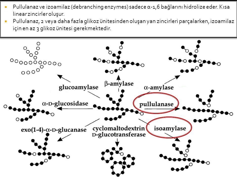  Pullulanaz ve izoamilaz (debranching enzymes) sadece α-1,6 bağlarını hidrolize eder. Kısa linear zincirler oluşur.  Pullulanaz, 2 veya daha fazla g