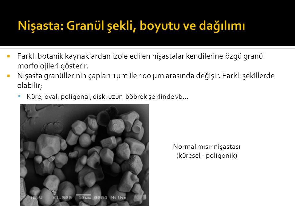 Patates nişastası (küresel - oval) Buğday nişastası (iki şekilli dağılım: disk şekilli büyük granüller ve küresel şekilli küçük granüller ) Sorgum nişastası (iki şekilli dağılım: poligonal ve küresel büyük granüller)
