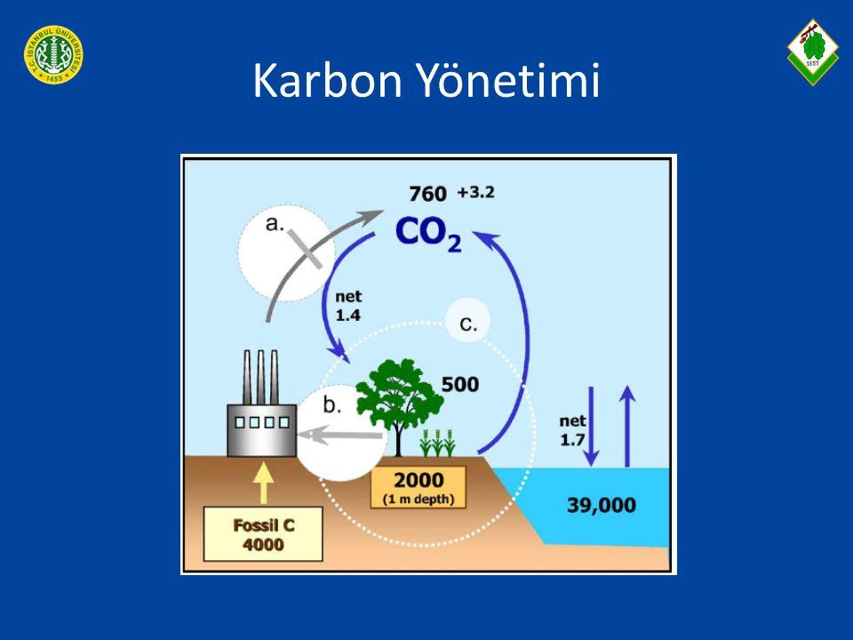 Karbon Yönetimi