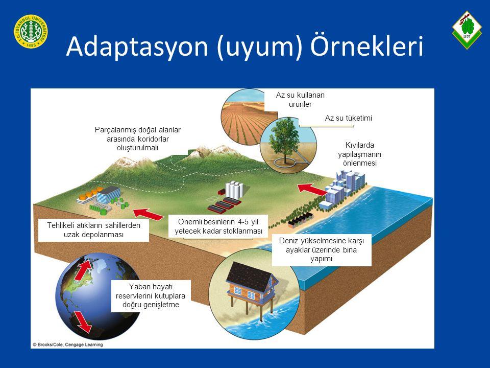 Adaptasyon (uyum) Örnekleri Parçalanmış doğal alanlar arasında koridorlar oluşturulmalı Az su kullanan ürünler Az su tüketimi Kıyılarda yapılaşmanın ö