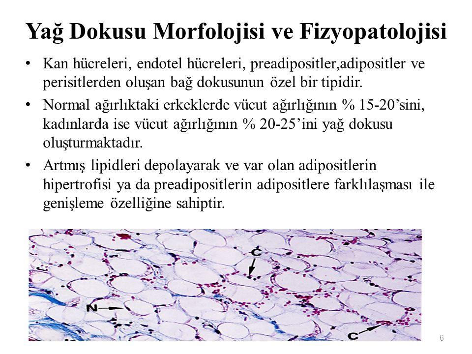 Yağ Dokusu Morfolojisi ve Fizyopatolojisi Kan hücreleri, endotel hücreleri, preadipositler,adipositler ve perisitlerden oluşan bağ dokusunun özel bir tipidir.