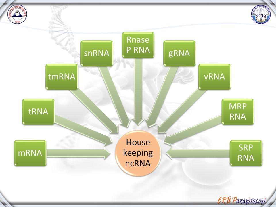 House keeping ncRNA mRNAtRNAtmRNAsnRNA Rnase P RNA gRNAvRNA MRP RNA SRP RNA