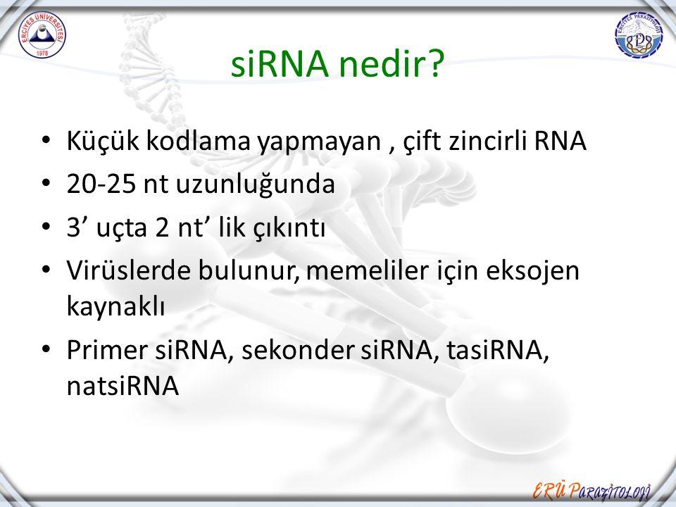 siRNA nedir? Küçük kodlama yapmayan, çift zincirli RNA 20-25 nt uzunluğunda 3' uçta 2 nt' lik çıkıntı Virüslerde bulunur, memeliler için eksojen kayna