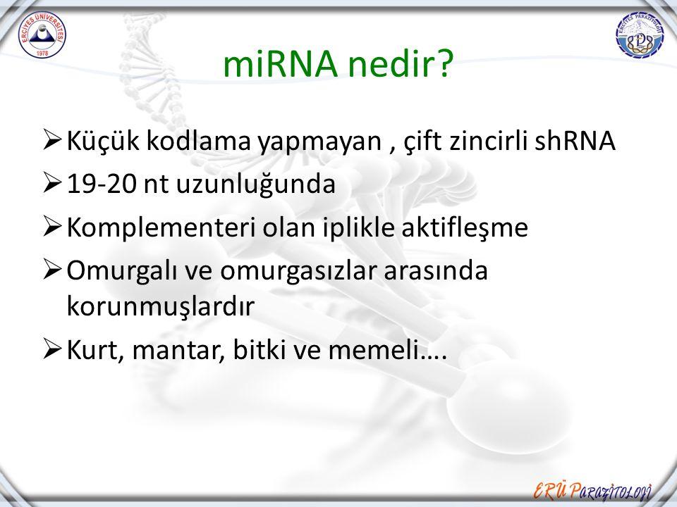 miRNA nedir?  Küçük kodlama yapmayan, çift zincirli shRNA  19-20 nt uzunluğunda  Komplementeri olan iplikle aktifleşme  Omurgalı ve omurgasızlar a