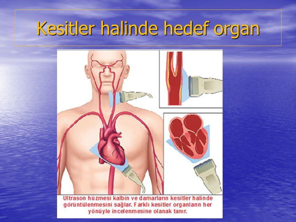 Kesitler halinde hedef organ