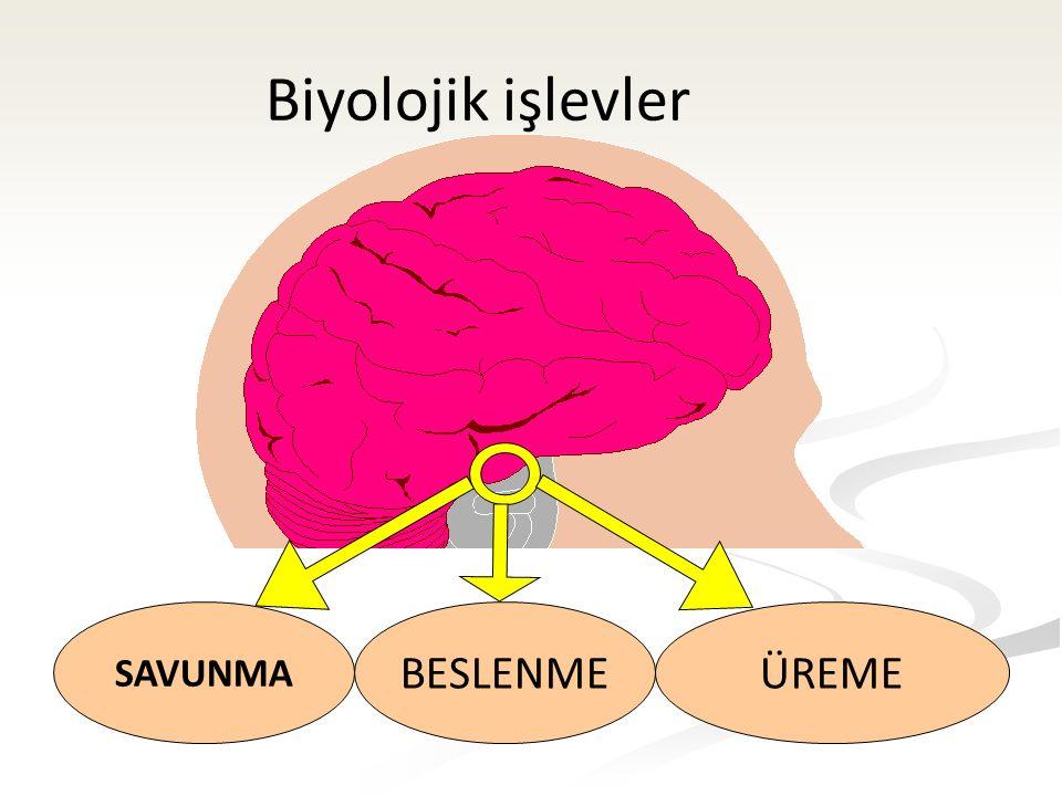 AMİGDALA korku ve diğer duygular Prefrontal korteks Yaklaşma/Kaçınma Ödül temelli Davranış Aktivasyon Sistemi Amodio 2008