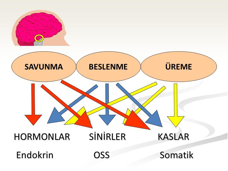 SAVUNMABESLENMEÜREME HORMONLAR SİNİRLER KASLAR Endokrin OSS Somatik Endokrin OSS Somatik