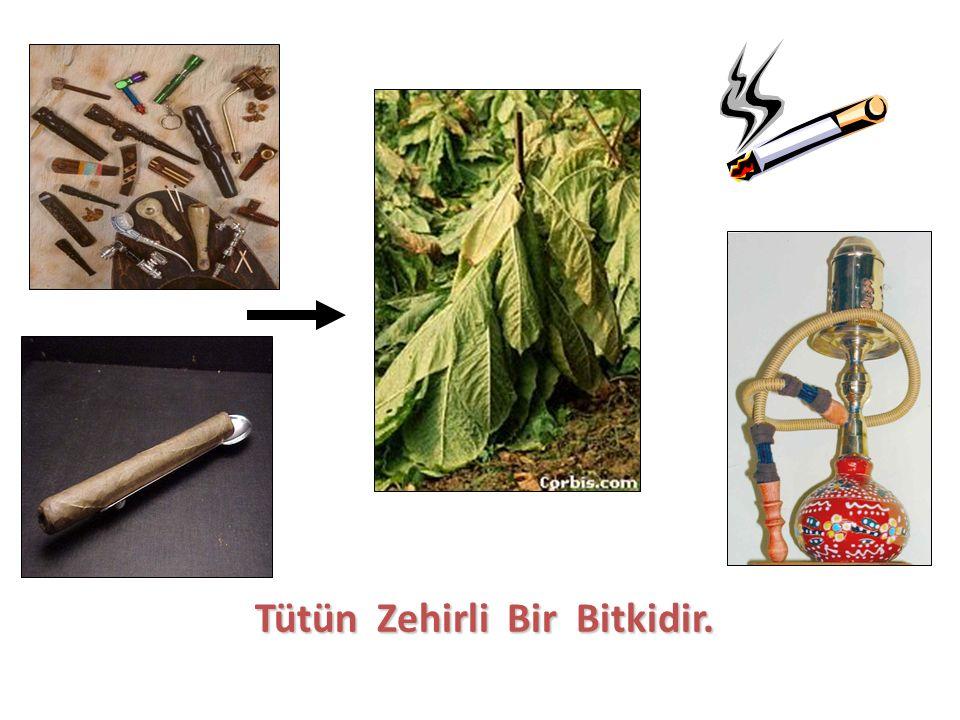 Tütün Zehirli Bir Bitkidir. Tütün Zehirli Bir Bitkidir.