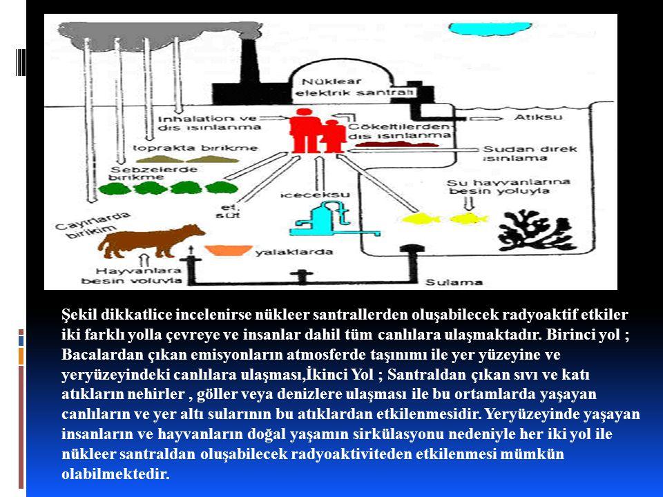 Şekil dikkatlice incelenirse nükleer santrallerden oluşabilecek radyoaktif etkiler iki farklı yolla çevreye ve insanlar dahil tüm canlılara ulaşmaktadır.