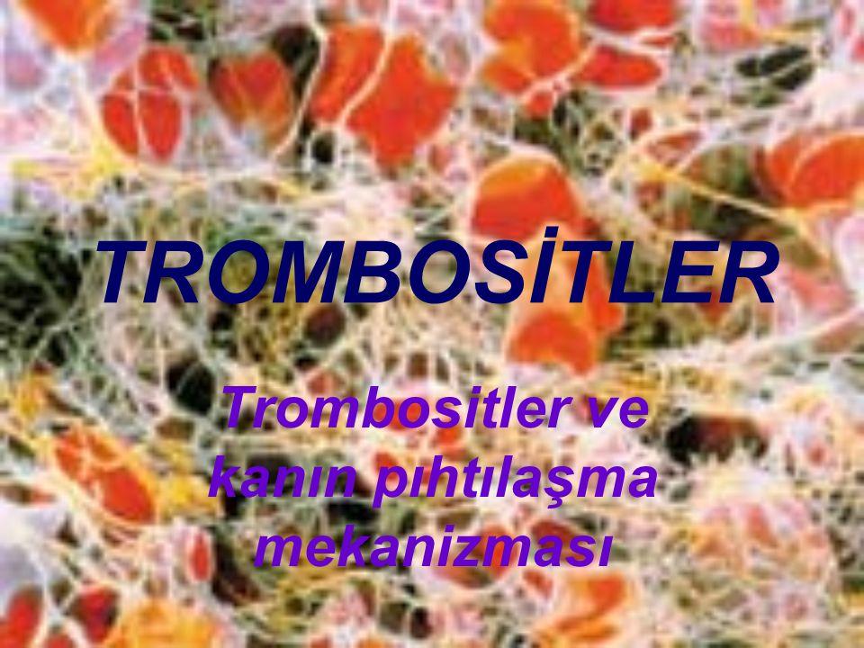 TROMBOSİTLER Trombositler ve kanın pıhtılaşma mekanizması