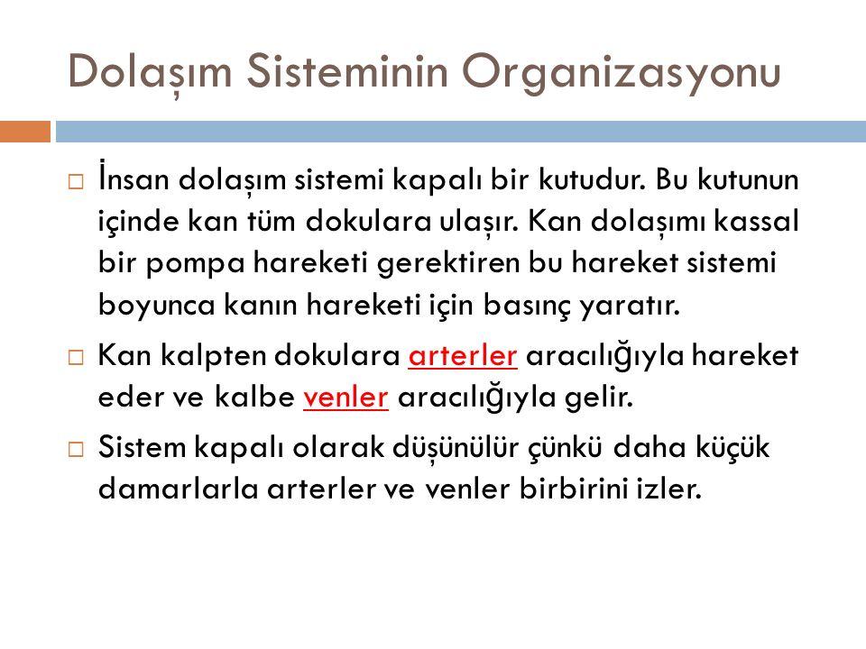 Dolaşım Sisteminin Organizasyonu  İ nsan dolaşım sistemi kapalı bir kutudur.