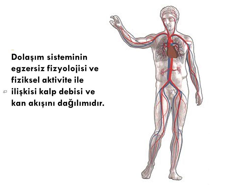 Dolaşım sisteminin egzersiz fizyolojisi ve fiziksel aktivite ile ilişkisi kalp debisi ve kan akışını da ğ ılımıdır.