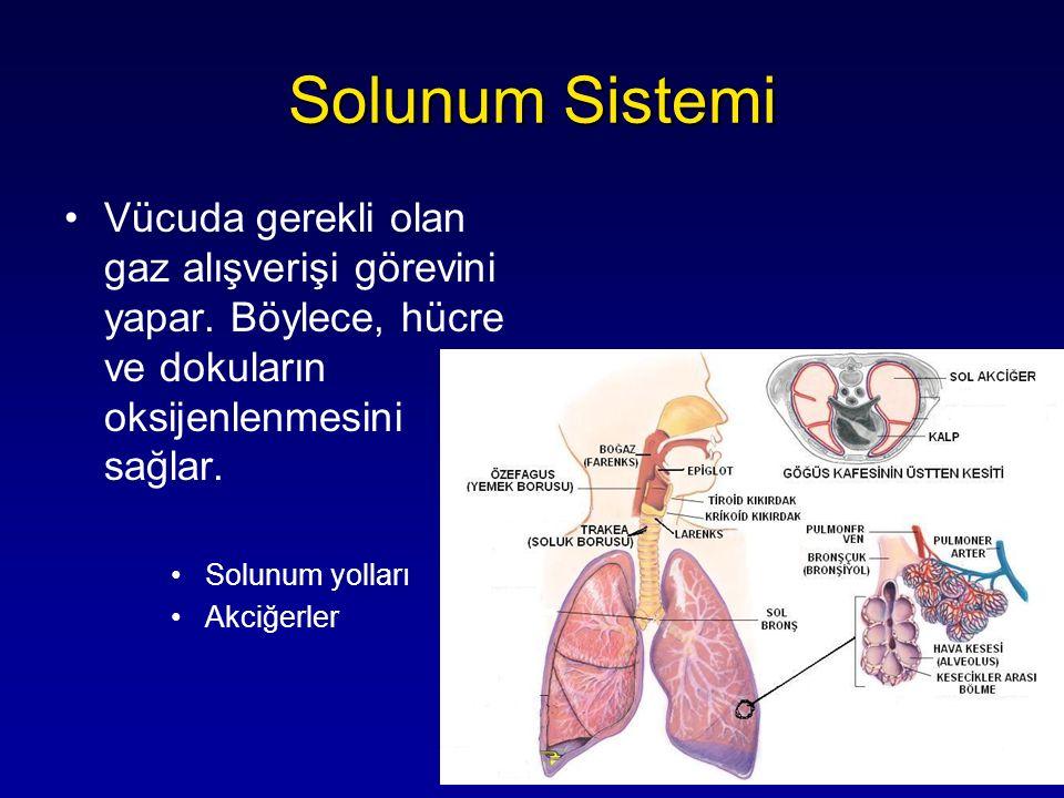 Vücuda gerekli olan gaz alışverişi görevini yapar. Böylece, hücre ve dokuların oksijenlenmesini sağlar. Solunum yolları Akciğerler
