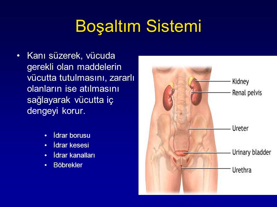 Kanı süzerek, vücuda gerekli olan maddelerin vücutta tutulmasını, zararlı olanların ise atılmasını sağlayarak vücutta iç dengeyi korur. İdrar borusu İ