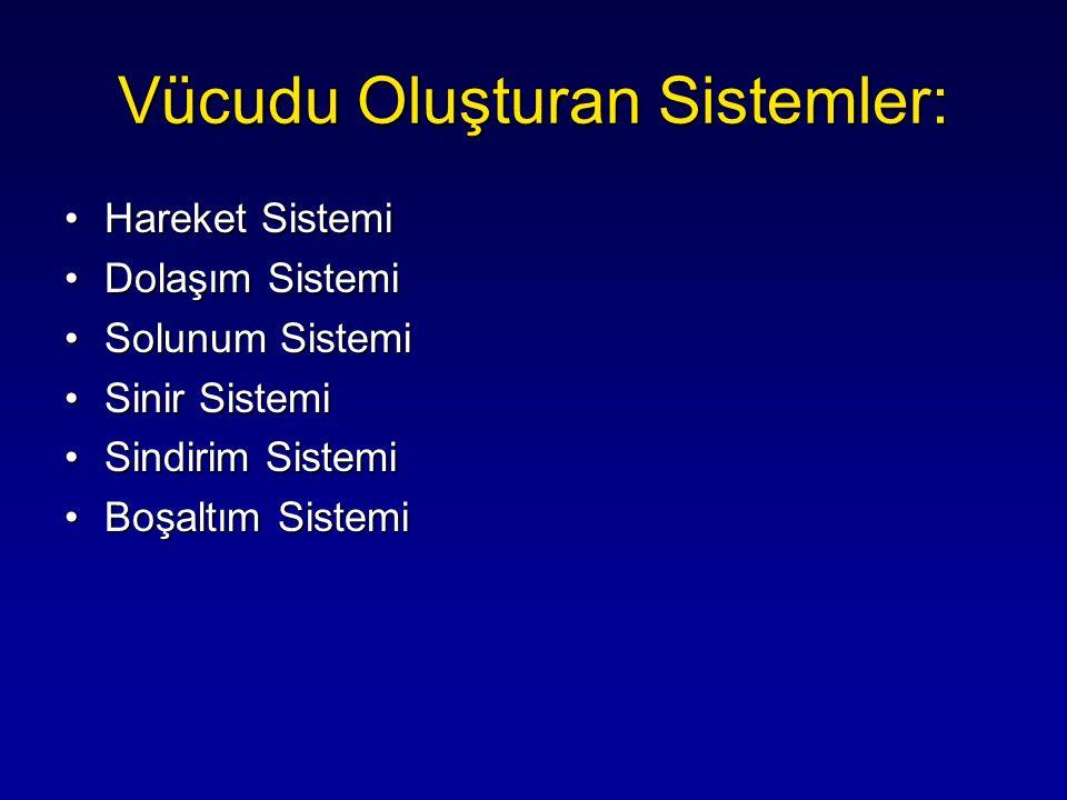 Vücudu Oluşturan Sistemler: Hareket SistemiHareket Sistemi Dolaşım SistemiDolaşım Sistemi Solunum SistemiSolunum Sistemi Sinir SistemiSinir Sistemi Si